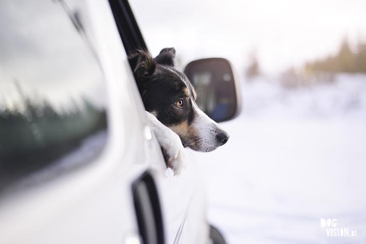 dogs, friends, Sweden| www.Fenne.be | www.DOGvision.be