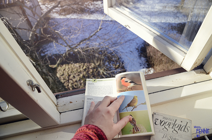 Bird spotting | www.Fenne.be
