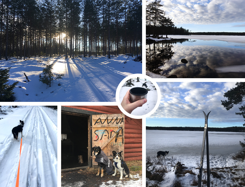 Skiing with dogs | www.Fenne.be | Dalarna, Sweden