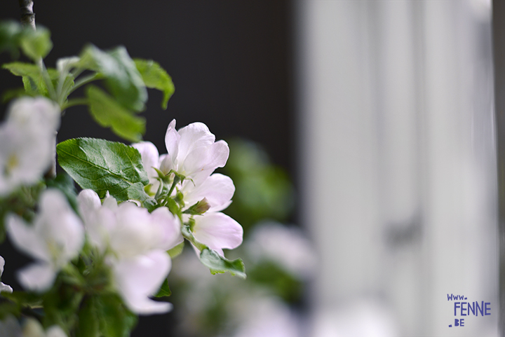 Spring in Sweden, apple blossoms in our kitchen | blog on www.Fenne.be