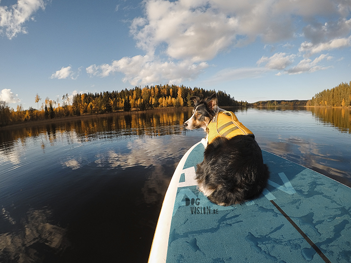 STand up paddle board | border Collie | Ruffwear | red Paddle Co | www.Fenne.be