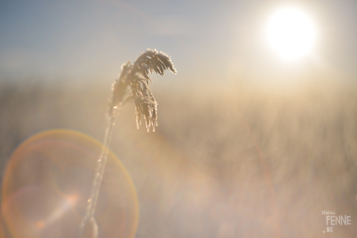 Frozen Days | winter in Sweden | Nature photography | www.Fenne.be