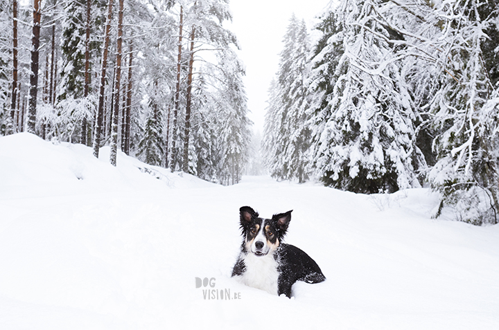 Wednesday Wanderings| nature photography | Hiking with dogs| Sweden | blog | www.Fenne.be