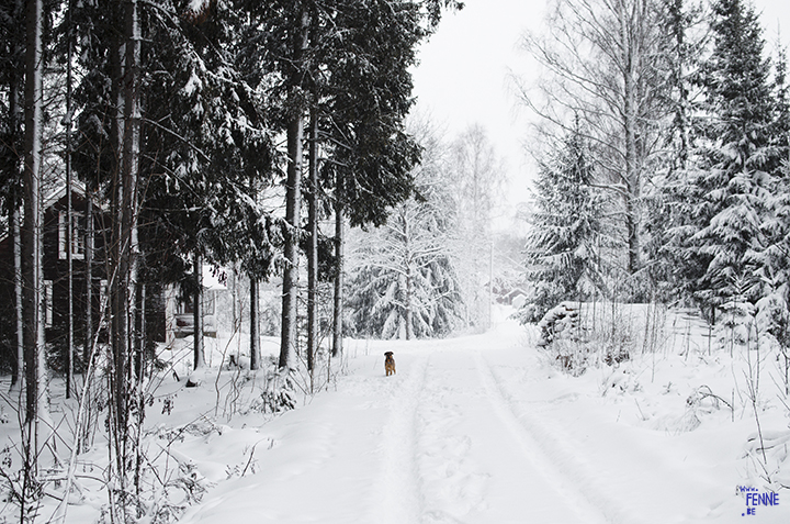 Wednesday Wanderings (05) | photographing Swedish life and nature | Nikon photographer| Snow | www.Fenne.be