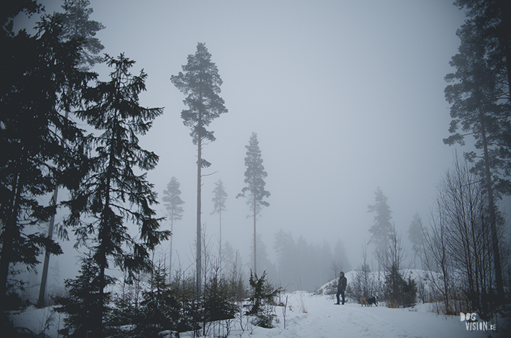 Wednesday Wanderings (06)| Nordic lifestyle, exploring Sweden, nature photography | www.Fenne.be