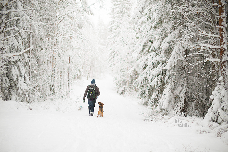 Winter in Sweden, wednesday wanderings in the forest and around the lakes, slow living, nature lover, artist, www.Fenne.be