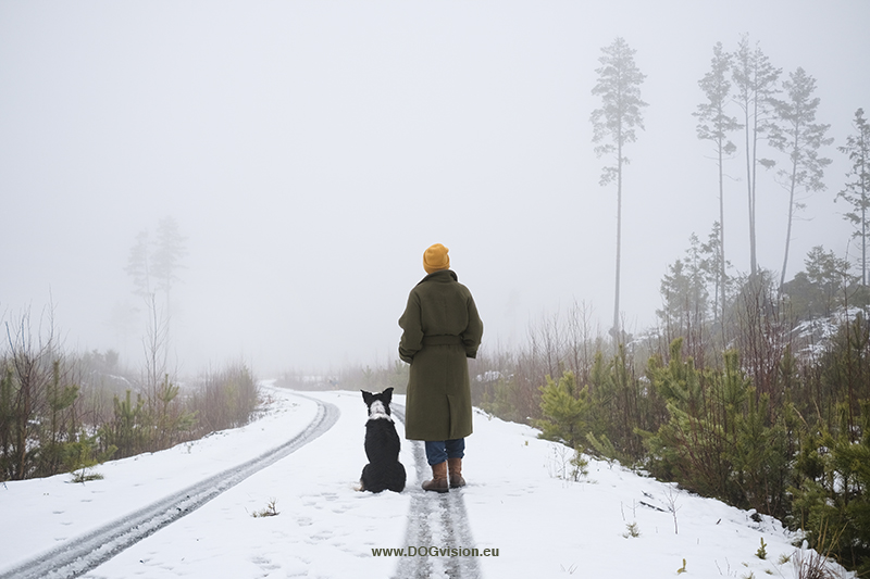 Wednesday Wanderings, hiking and wandering in Dalarna Sweden. Early winter, snow and fog, moose trail, Border Collie, www.Fenne.be