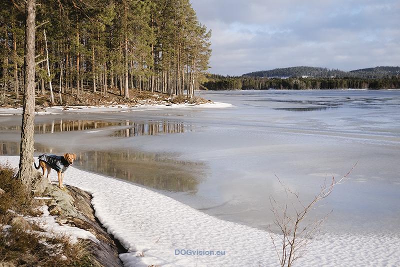 Wandering and walking in Dalarna Sweden, slow Nordic lifestyle, dog mom, nature photography. Vandra med hed, natur fotografi Sverige. www.Fenne.be