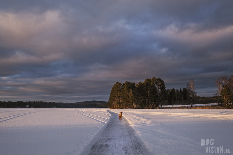 Spark - kicksled on froze lakes in Sweden. Nature photography & experience, www.Fenne.be