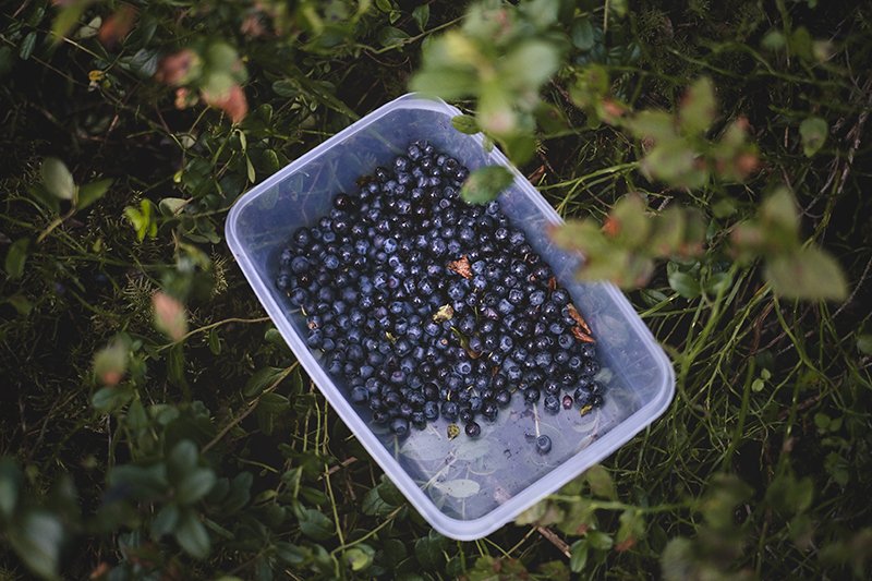 Making my own ink from blueberries from the Swedish forest, www.Fenne.be