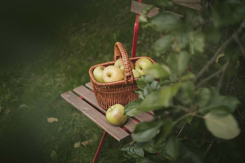 Apples from our own garden, countryside lifestyle, cottagecore, cabincore, apple sauce, Swedish countryside, www.Fenne.be