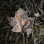 First frost, winter arriving in Sweden, Dalarna autumn, nature photography Sweden, Nordic nature blog, www.Fenne.be